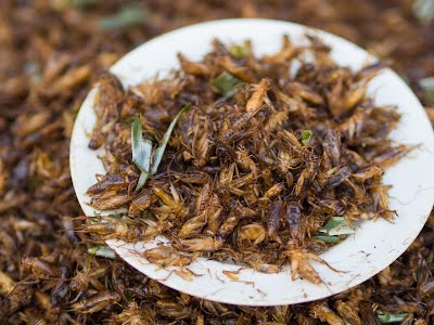 Fried crickets with lemongrass on plate